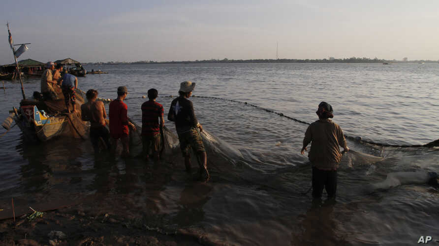 Vietnamese fishermen collect catches from the Mekong river near Arey Ksat village on the outskirts of Phnom Penh, Cambodia, Feb. 6, 2014.