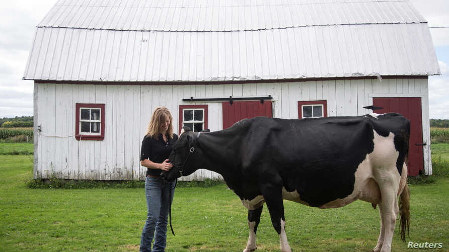 Dairy farmer Marie-Pier G. Vincent poses with one of her dairy cows at her farm in Saint-Valerien-de-Milton, southeast of Montreal, Quebec, Canada, Aug.30, 2018.