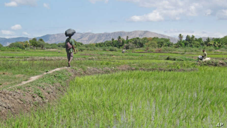 Rural jobs would improve food supplies and prevent crowding in Haiti's capital.