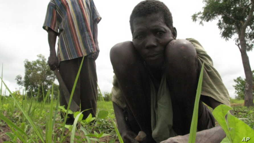 A laborer tends to a field in the Central African Republic, despite his affliction with river blindness. (File)