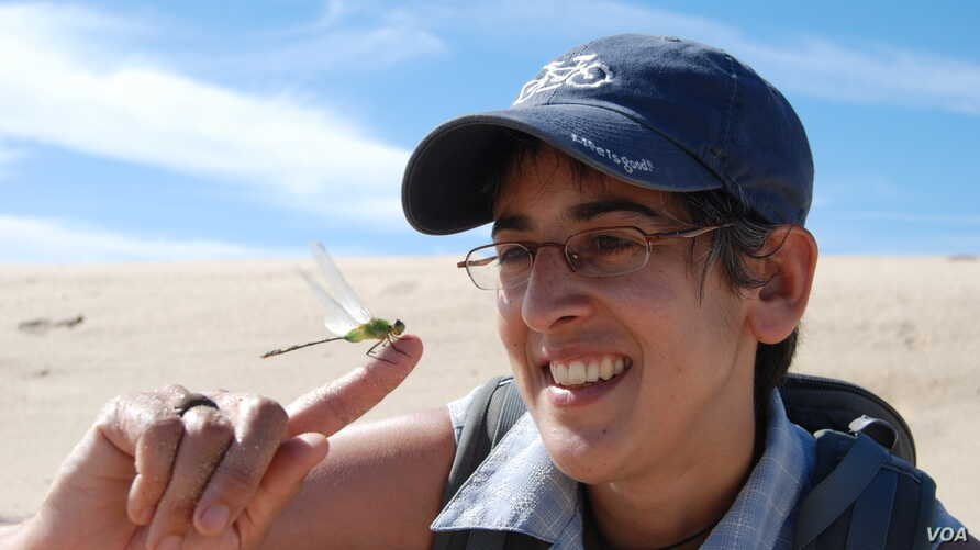 University of British Columbia ecologist Diane Srivastava, with a damselfly, an insect often used as an indicator species for estimating biodiversity and assessing ecosystem health. (T. Zulkoskey)