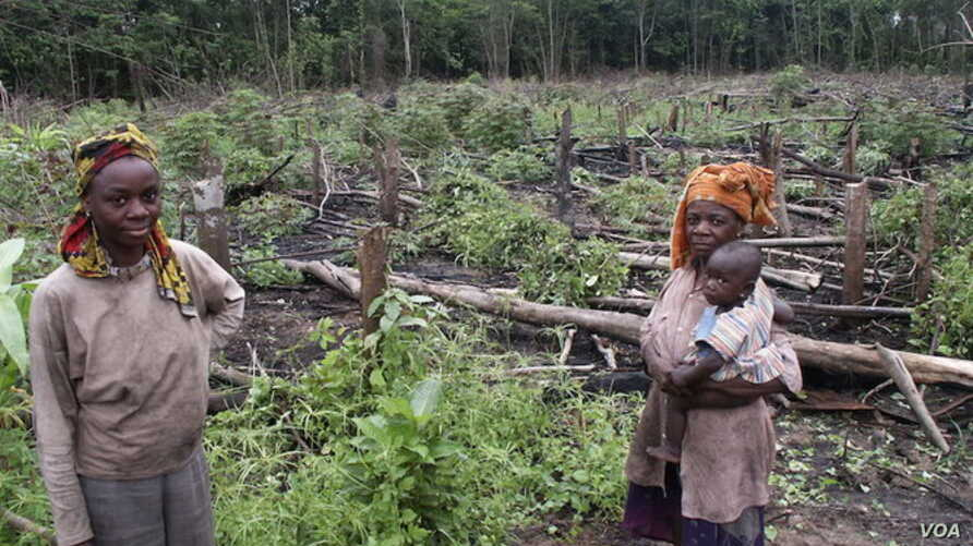 FILE - Using rudimentary methods, small-scale farmers eke out a living in Gabon.