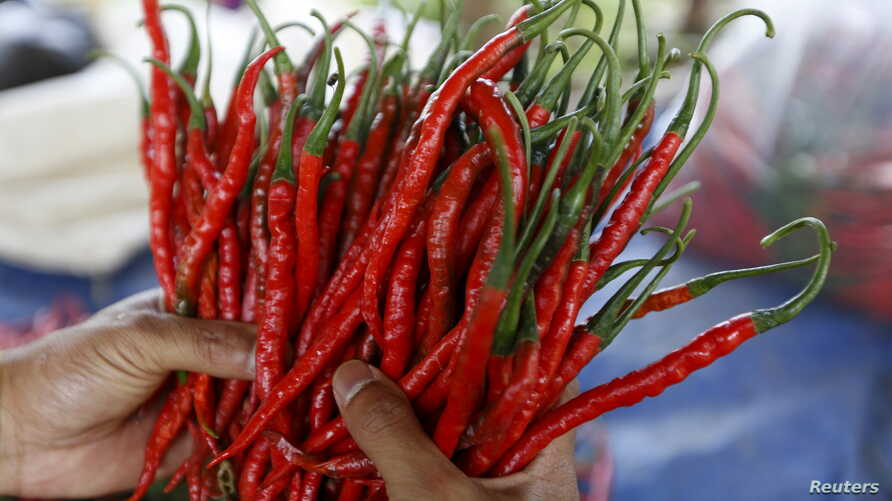 A worker holds harvested chilies at a plantation in Pasir Datar Indah village near Sukabumi, Indonesia's West Java province, Aug. 6, 2015.