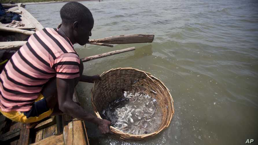 A fishermen cleans fish in the waters of Caracol Bay before selling it to fish vendors near Cap Haitien, Haiti, May 14, 2015.