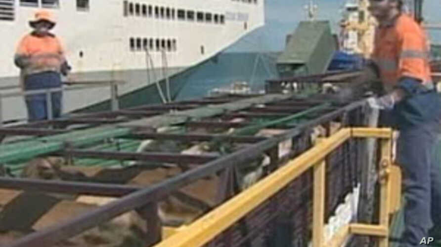 Australia Suspends Exports to Some Indonesian Slaughterhouses