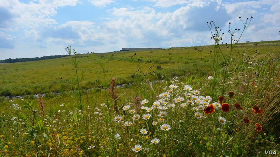 The site where Flight 93 crashed on 9/11, the final resting place of its passengers and crew, is now a field of wild flowers.