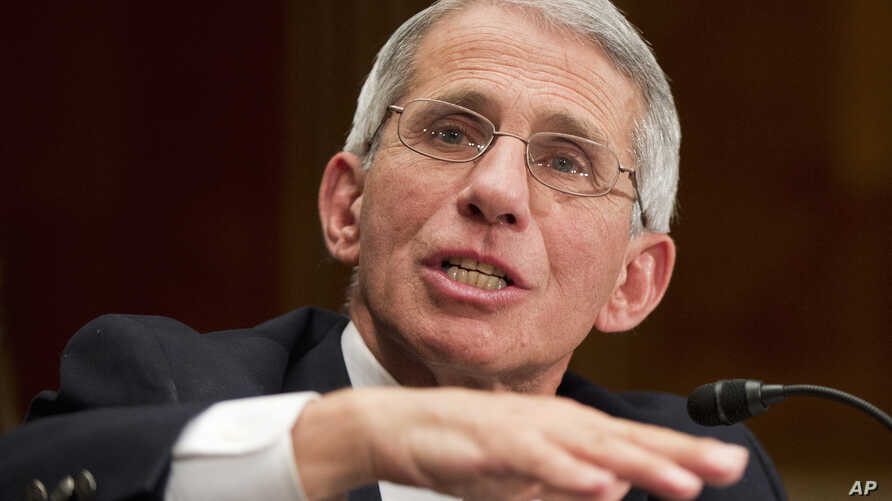 NIH National Institute of Allergy and Infectious Diseases Director Anthony Fauci testifies on Capitol Hill in Washington, Feb. 11, 2016.