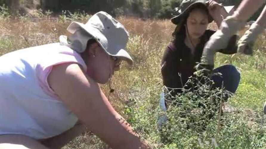 Teens Connect with Nature on California Island