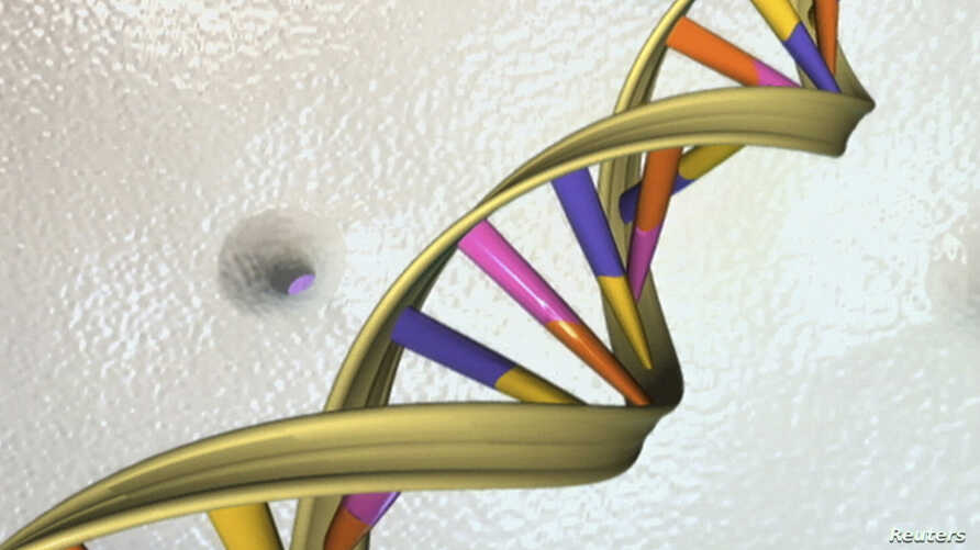 DNA double helix is seen in an undated artist's illustration released by the National Human Genome Research Institute