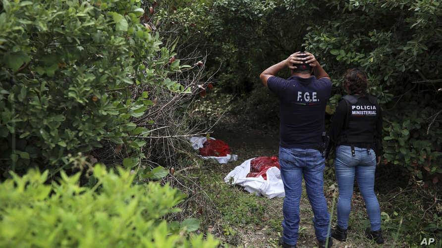 Investigators look at human remains placed in red evidence bags, dug from a clandestine grave site in Arbolillo, Veracruz state, Mexico, Sept. 7, 2018.