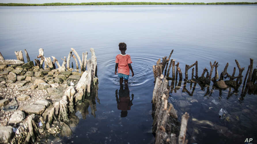 FILE - A young girl wades in the water outside of the home of Fatou Faye, in Diamniadio Island, Saloum Delta in Senegal, Oct. 18, 2015. The place where Faye's kitchen once stood is now outlined with short branches of mangroves that she hopes will slo