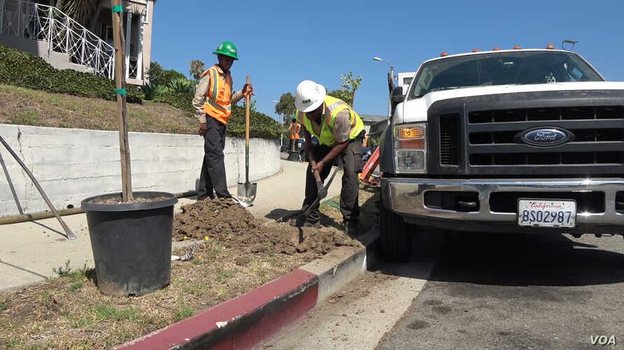 LA Conservation Corps crew supervisor Jeff Davis helps corps member plant a sapling curbside in Los Angeles.