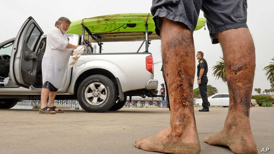 In this photo provided by the Santa Barbara County, Calif., Fire Department, Henry Duncan, left, and Bob Seiler, legs covered in oil, foreground, stand in the Goleta Beach parking lot with their oil-covered kayaks, on the truck at rear, in Goleta, Ca