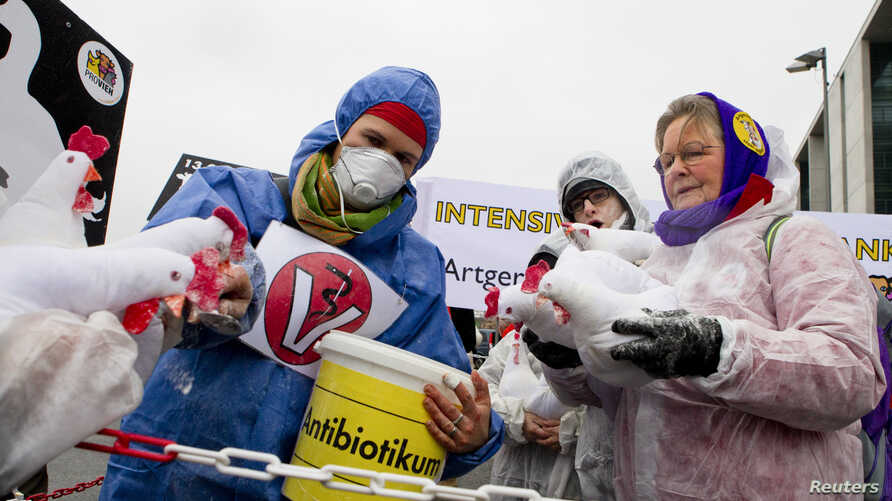 A demonstrator feeds mock antibiotics to chicken puppets during a protest denouncing industrial livestock farming and current agricultural policies in Berlin, Jan. 21, 2012.