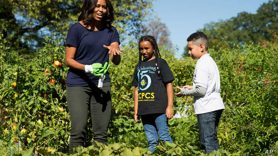 FILE - First lady Michelle Obama, joined by school children from Washington area, jokes that she needs to put on gloves to protect her manicure during a harvest of the White House Kitchen Garden, at the White House in Washington.