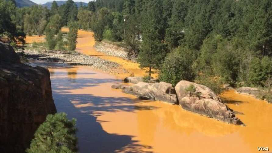 Mustard-colored wastewater laced with heavy metals is seen in the Animas River in La Plata County, Colorado.