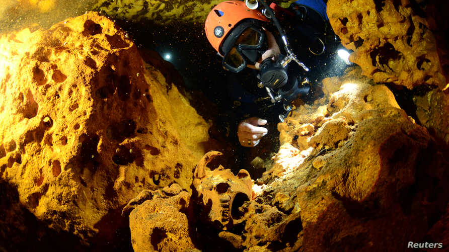 A scuba diver looks at an animal skull at Sac Aktun underwater cave system during exploration as part of the Gran Acuifero Maya Project near Tulum, in Quintana Roo state, Mexico, Feb. 12, 2014.