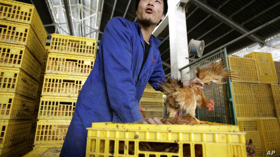 A worker unloads a chicken from a container at a wholesale market on April 3, 2013, in Shanghai, China.