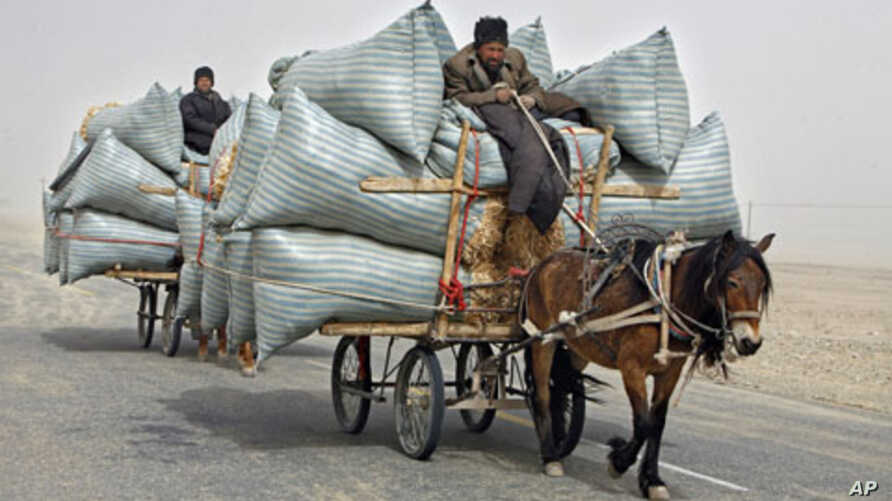 Uighur men ride their horse carts during a sandstorm as they deliver hay around the Paklamakan desert, some 100km [63 miles] east of Yecheng, in the region of Xinjiang, China, April 2008. (file photo)