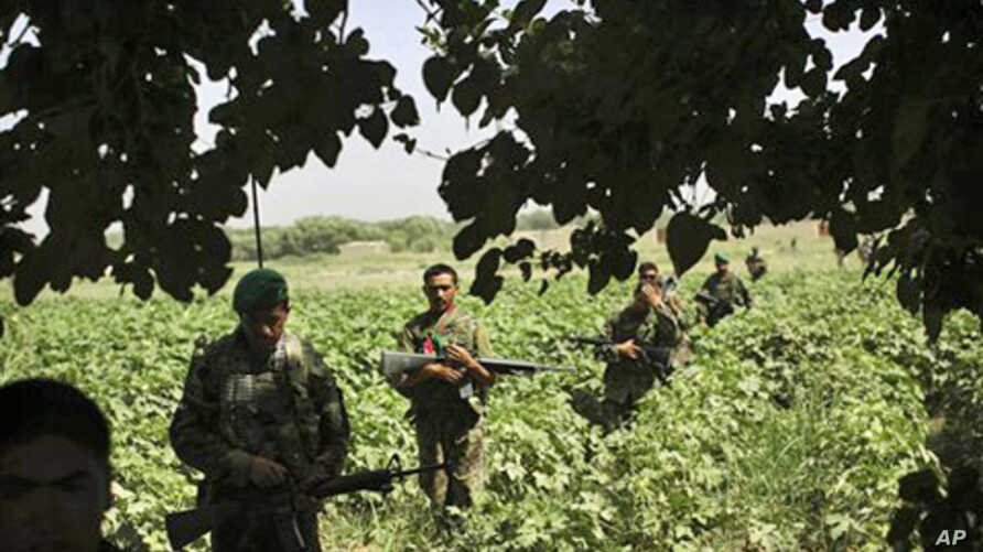 Afghan National Army soldiers patrol with United States Army soldiers from Bravo Company, in the volatile Arghandab Valley, outside Kandahar City, 10 July 2010.
