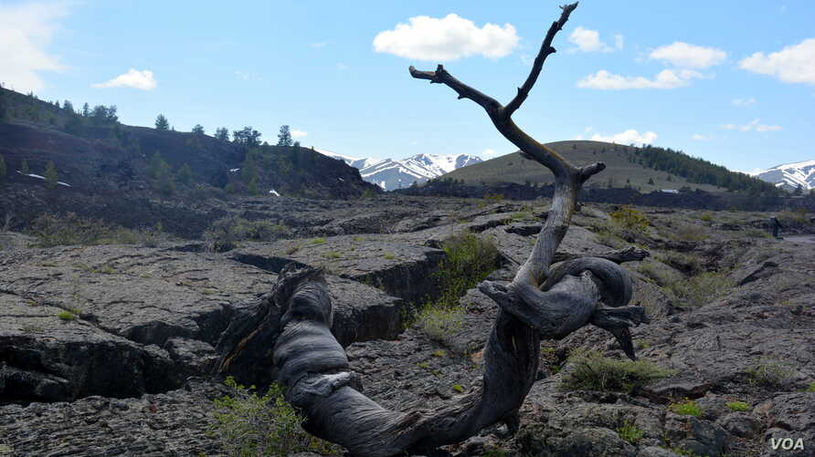 Many unusual formations, such as this Triple Twist Tree, are a common site at Craters of the Moon National Monument and Preserve in Southcentral Idaho.