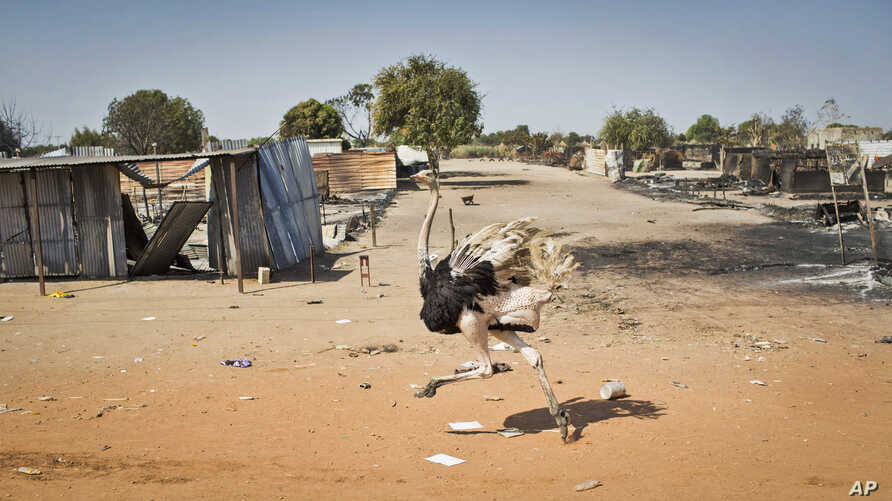 An ostrich runs through empty streets and past destroyed buildings, after government forces on Friday retook from rebel forces the provincial capital of Bentiu, in Unity State, South Sudan, Jan. 12, 2014.