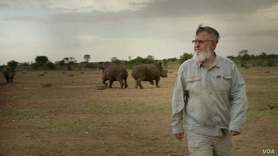 """John Hume, the worlds largest rhino breeder walks among his  rhinos. Mr. Hume had invested more than $50 million into his rhino project. He currently is the custodian of over 1,500 rhinos. (Photo courtesy of  """"Trophy"""")"""