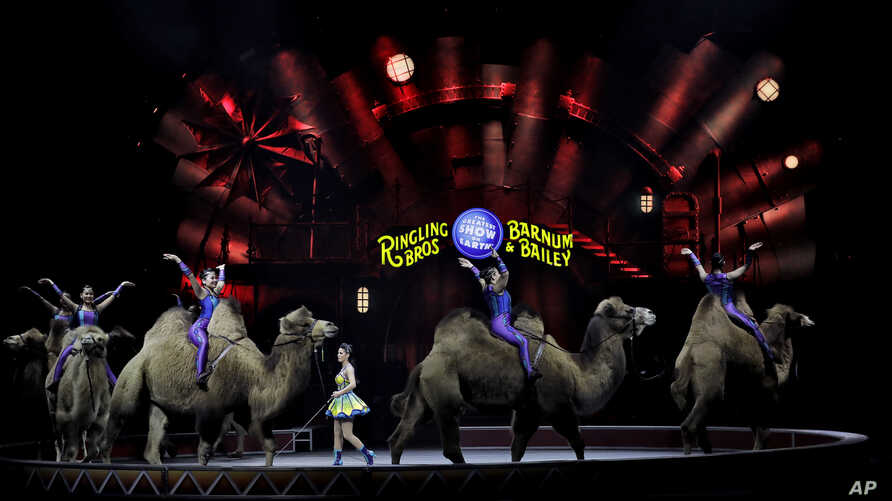 "Ringling Bros. and Barnum & Bailey performers ride camels during a performance, Jan. 14, 2017, in Orlando, Fla. The Ringling Bros. and Barnum & Bailey Circus will end the ""The Greatest Show on Earth"" May 21, following a 146-year run of performances."