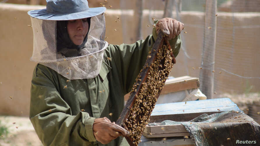 Beekeeper Frozan, 16, checks a beehive in the Marmul district of Balkh province, Afghanistan, March 29, 2018.