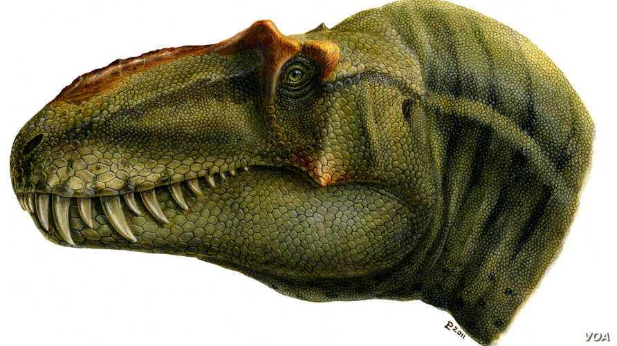 A skull reconstruction shows what the Lythronax might have looked like. (Natural History Museum of Utah)