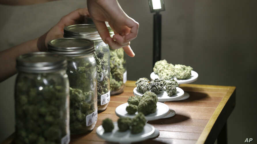FILE - Legalizing MarijuanaA vendor points out the variety of marijuana for sale at the grand opening of the Seattle location of the Northwest Cannabis Market, for sales of medical marijuana products.