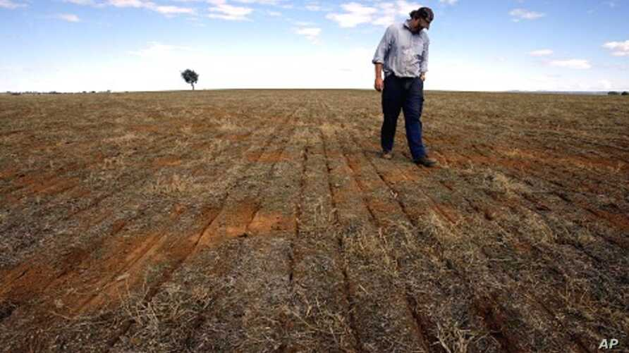 Farmer Ed Fagan inspects the rows of seeds on his property near the western New South Wales town of Cowra (file photo)