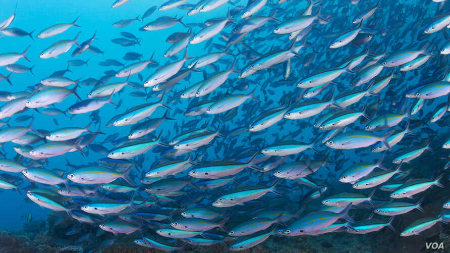Scientists call oceans the world's most important resource. (Conservation International)