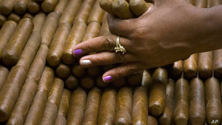 A sorter selects cigars at the H. Upmann cigar factory in Havana, Cuba, March 2, 2017.