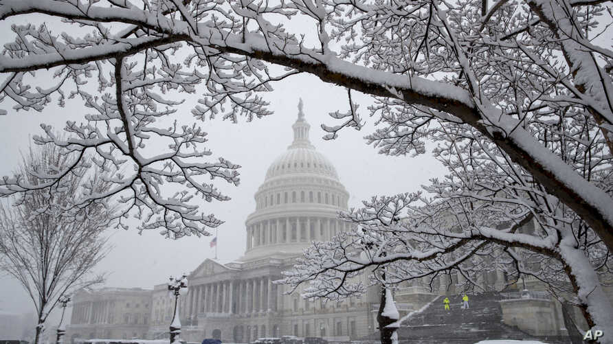 Snow clings to a Chinese dogwood tree as flurries come down at the U.S. Capitol in Washington, Wednesday, March 21, 2018.
