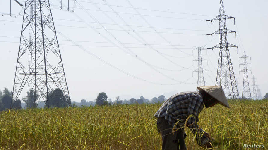 FILE - A farmer works in a paddy field under the power lines near Nam Theun 2 dam in Khammouane province, Oct. 28, 2013.