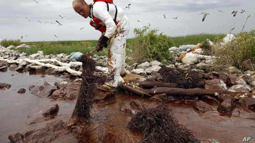 FILE- A worker picks up blobs of oil with absorbent snare on Queen Bess Island at the mouth of Barataria Bay near the Gulf of Mexico in Plaquemines Parish, Louisiana.
