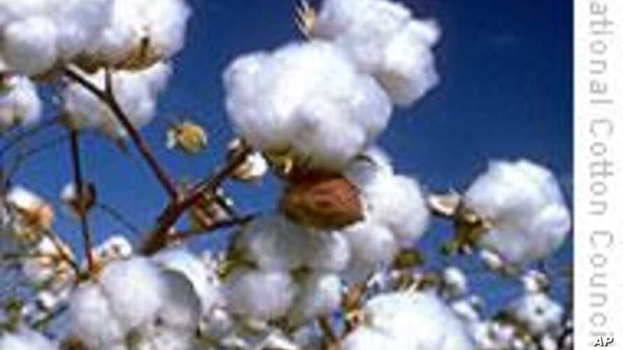 Cotton Producers in Mali Speak Out Against Climate Change