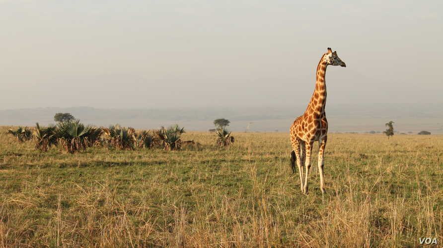 Uganda's Kidepo National Park was inaccessible to tourists for decades, Dec. 28, 2012. (Hilary Heuler for VOA)