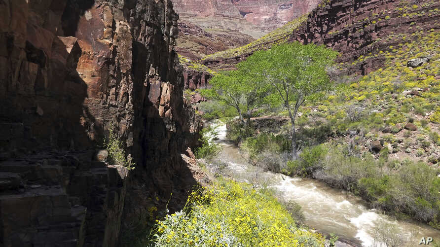 This National Park Service photo shows Tapeats Creek in Grand Canyon National Park in Arizona, April 16, 2017. Authorities are searching for Jackson Standefer, 14, and Lou-Ann Merrell, 62, after the pair lost their footing Saturday and fell into the