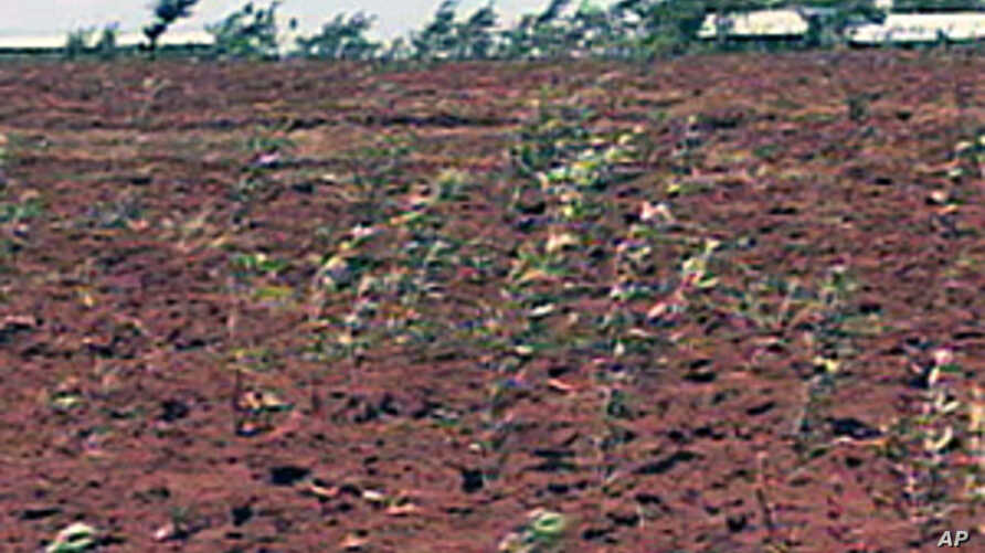 Crop insurance, via mobile phone technology, for farmers in Kenya help minimize losses
