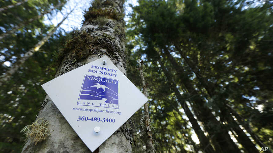 A project in Washington state is ensuring that forest land remains intact around Mount Rainier National Park, so the trees can continue to grow and store carbon dioxide emissions. One of the forest land boundary markers on a tree, Nov. 23, 2015, near