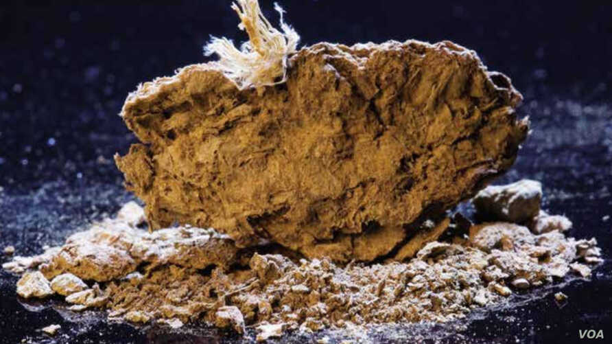 A 14,400-year-old human coprolite from Paisley Caves, the oldest identified site in Oregon listed on the National Register of Historic Places in 2014.  (Photo by Brian Lanker, courtesy of Dennis Jenkins, University of Oregon)