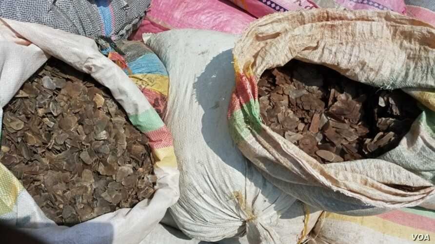 Pangolin scales seized in Douala, March 20, 2019. International trade in pangolins was banned in 2016 under the Convention on the International Trade in Endangered Species (CITES).