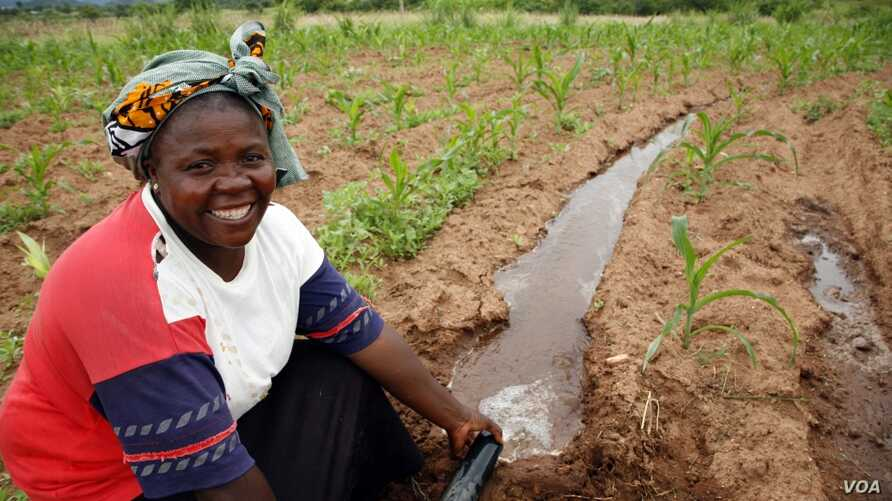 Rainwater harvesting is a small-scale irrigation technique. (SIWI)