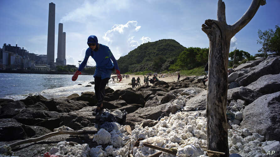 A volunteer collects the congealed palm oil which has been blanketing the shores of Hong Kong's Lamma Island, Aug. 8, 2017.