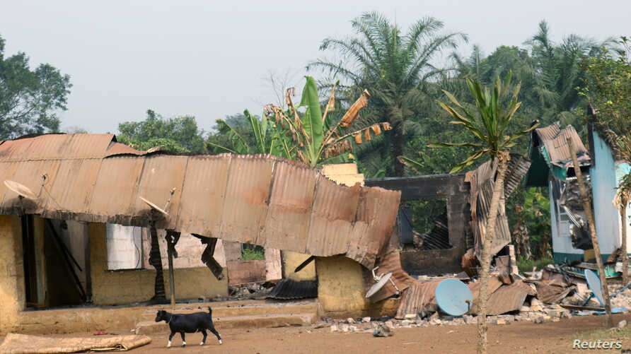 FILE - A goat walks past burned and damaged buildings in Kembong, Southwest region of Cameroon, Dec. 29, 2017.
