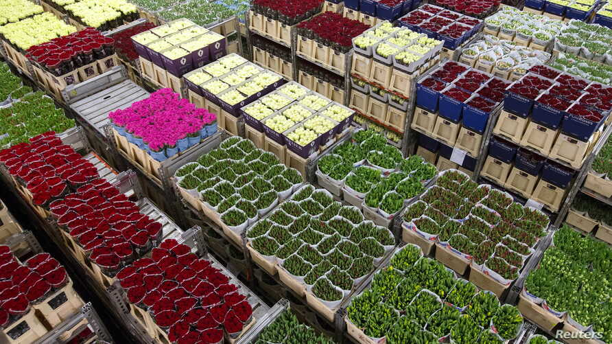 Flowers are prepared at a FloraHolland warehouse in Aalsmeer, the Netherlands, March 16, 2016.