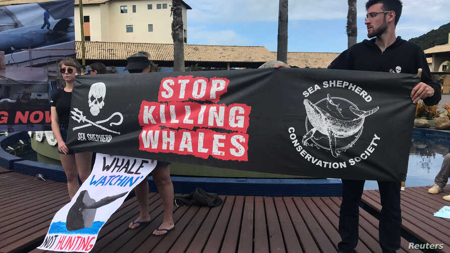 Activists attend a protest during the International Whaling Commission (IWC) conference in Florianopolis, Brazil, Sept. 10, 2018.