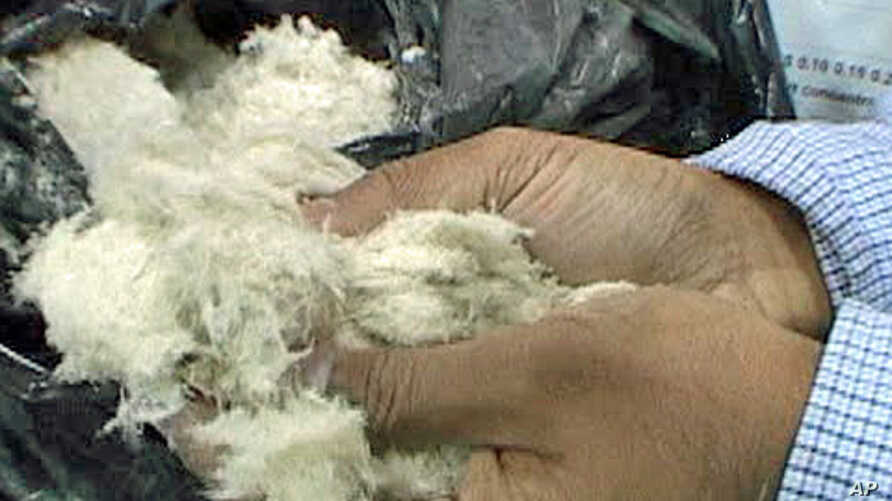 Biodegradable plastics can be made from chicken feathers
